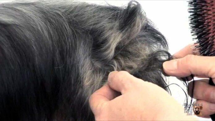 düğüm olmuş saç nasıl açılır
